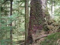Magical Forests of Haida Gwaii